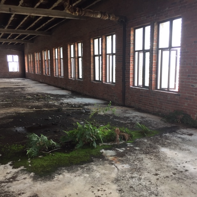 Old Empty Building Interior with weeds